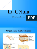 La_C_lula (1) (1)