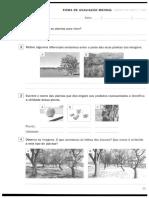 Ficha Estudo Do Meio-3ºAno_2