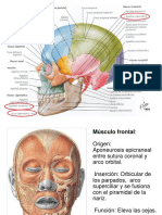 músculos de cara