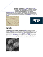 Adipocito.docx
