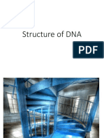 Structure of DNA Patfinals