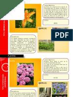 Catálogo de plantas (Arq. Israel Romo Jáuregui).pptx