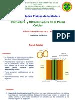 2 Estructura de La Pared Celular (1)