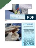 Fotos Ecoe Anestesio
