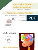 Funciones_de_los_lobulos_cerebrales_rece.pdf