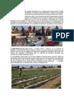 actividades economicas huacho.docx