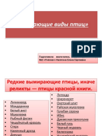 Redkie Vymirayushchie Ptitsy Inache Relikty (1)