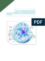 Biologia_Curtis- Celula En Síntesis (Unidad I)