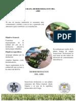 Infografia del proyecto (Biorremediacion del aire)-Wendy Goez