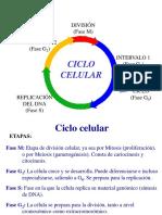 lauraciclocelular-091203120247-phpapp02
