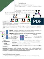 I PARCIAL GENÃ_TICA.pdf