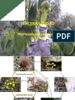 TERCERA UNIDAD - PROPAGACIÓN AEXESUAL DE PLANTAS.pdf