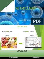 El Metabolismo [Autoguardado]