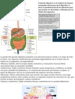 p, Digestivos