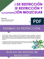 Enzimas de restricción y clonación molécular
