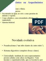 nematelmintos-110607192442-phpapp01