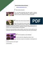 272125701-Guia-de-Cultivo-de-Rosas-Do-Deserto.pdf