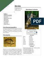 Sternotherus_odoratus