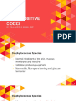2. Gram Positive Cocci