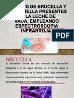 Analisis de Brucella y Salmonella en Leche