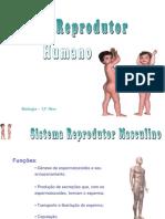 1.Sistema Reprodutor Humano