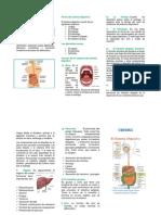 323755939-Sistema-Digestivo-Folleto.docx