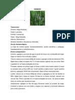 Plantas Medicinales Sarita