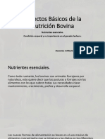Aspectos Básicos de La Nutrición Bovina