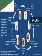 Infografía ciclo vital familiar