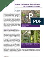 Deficiencia de Fosforo en los Cultivos.pdf