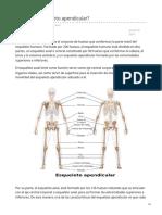 lifeder.com-Qué es el esqueleto apendicular.pdf