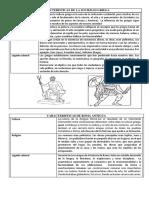 Características de La Sociedad Griega y Romana