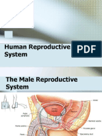 Reproductive System of Human