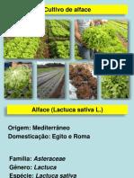 ALFACE (1).pdf