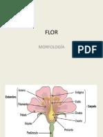 FLOR (Plantas Superiores)