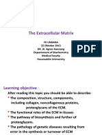 Matriks Ekstraseluler