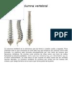 Anatomía de la columna vertebral.docx