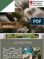 Diapositivas Reptiles 1