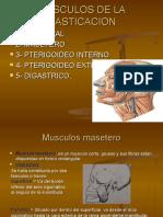 musculosdelamasticacion-130423193640-phpapp01