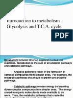 Glycolysis +TCA