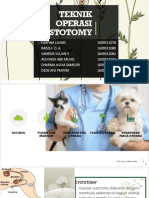 cystotomi veteriner