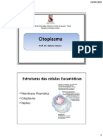 Aula 04- Citoplasma