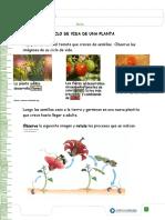 Ciclo de vida de las plantas Ciencias Naturalez 3B.docx
