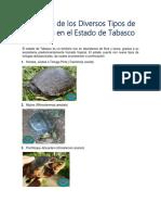 Extinción de Los Diversos Tipos de Tortugas en El Estado de Tabasc1