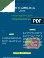 Cancer de Estomago y Cancer de Colon