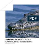 ANIMALES CARNÍVOROS.docx
