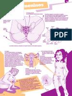 Aparatos Genitales PDF