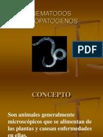 NEMATODOS PARASITOS DE PLANTAS.ppt