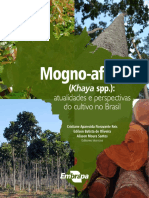 Mogno-Africano-08-10-2019