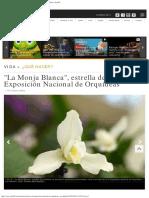 La Monja Blanca Estrella de La Xl Esposicion Nacional de Orquideas